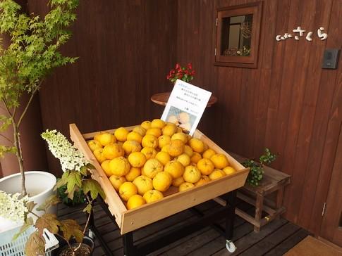 f:id:akinosato:20150528145610j:image