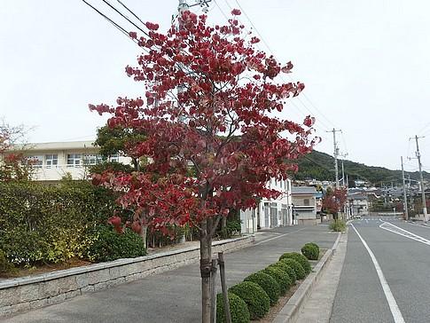 f:id:akinosato:20151101100750j:image