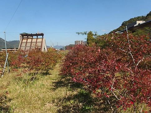 f:id:akinosato:20151104124822j:image