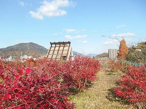 f:id:akinosato:20151207135130j:image