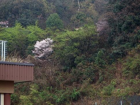 f:id:akinosato:20160401124524j:image