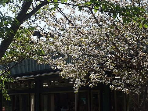 f:id:akinosato:20160420141106j:image