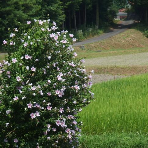 f:id:akinosato:20160731114332j:image