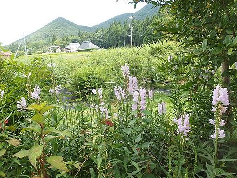 f:id:akinosato:20160820130305j:image