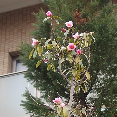 f:id:akinosato:20170223104750j:image