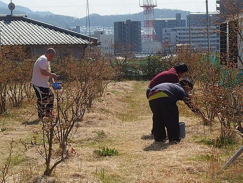 f:id:akinosato:20170404142438j:image
