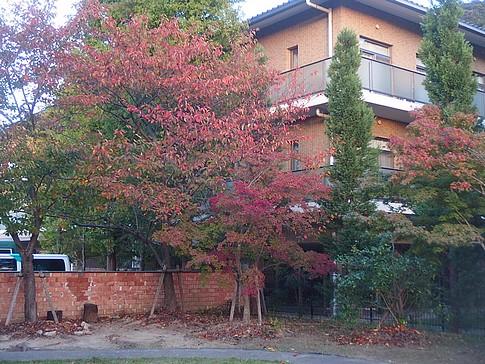 f:id:akinosato:20171030171319j:image