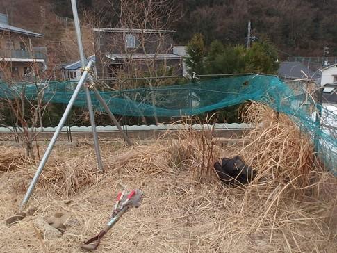 f:id:akinosato:20180216160309j:image