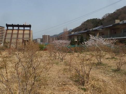 f:id:akinosato:20180329124412j:image