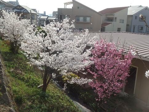 f:id:akinosato:20180329160105j:image