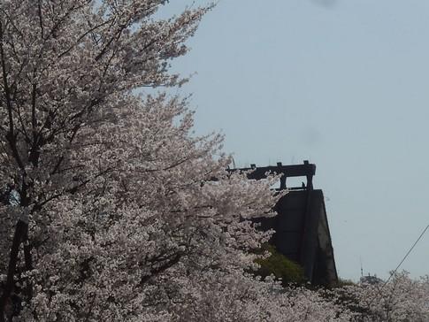 f:id:akinosato:20180330142345j:image