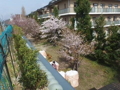 f:id:akinosato:20180402150004j:image