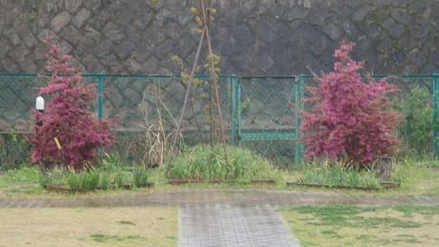 f:id:akinosato:20180406085137j:image