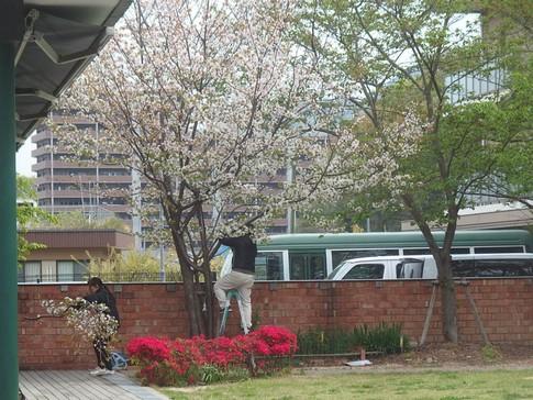 f:id:akinosato:20180414102629j:image