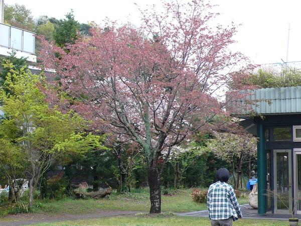 f:id:akinosato:20190410123932j:plain