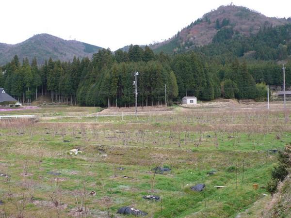 f:id:akinosato:20190413155524j:plain
