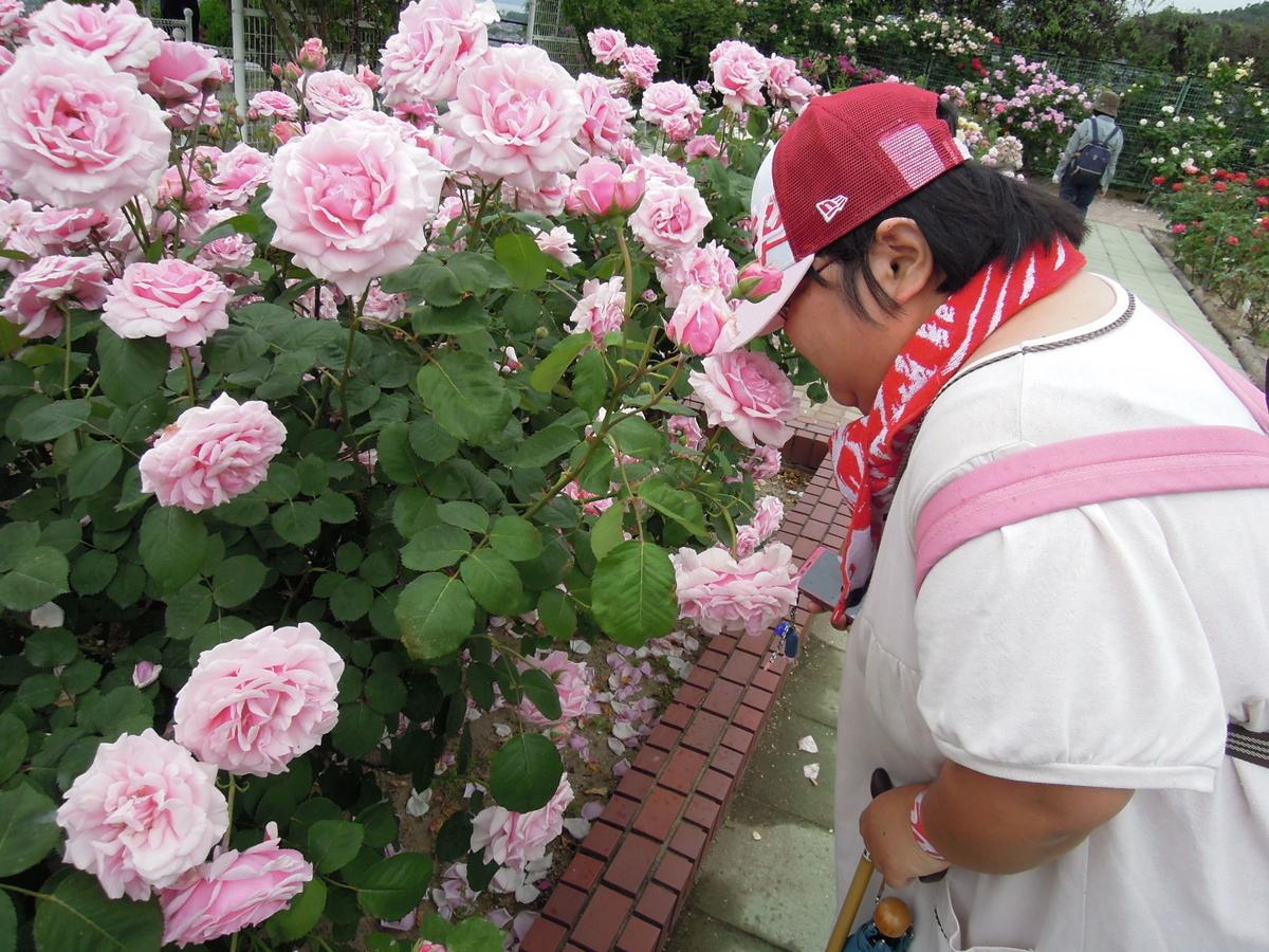 f:id:akinosato:20190518123220j:plain