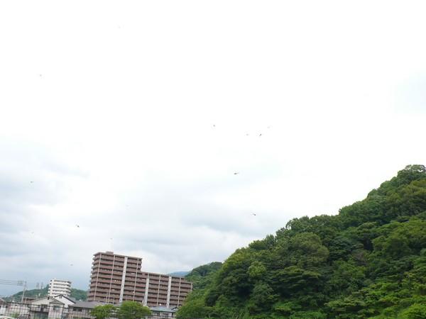 f:id:akinosato:20190628124404j:plain