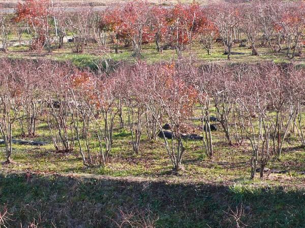 f:id:akinosato:20200104151931j:plain