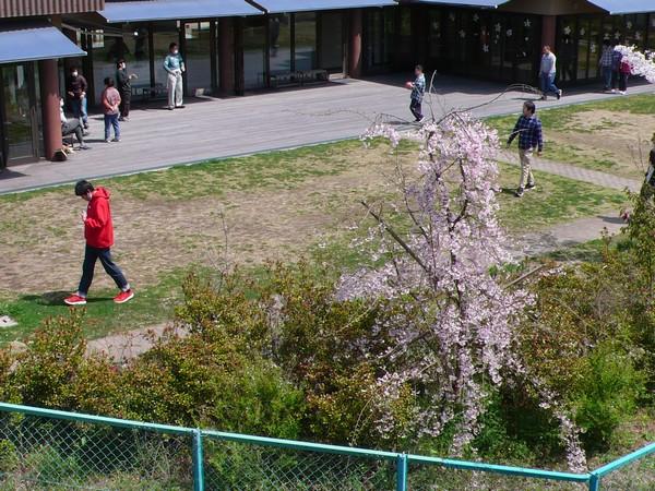 f:id:akinosato:20200402123840j:plain