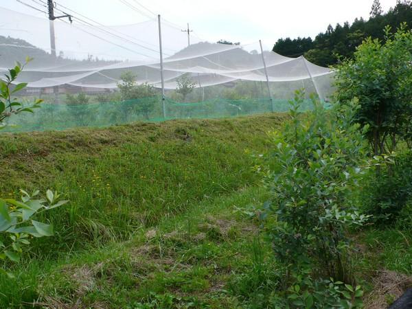 f:id:akinosato:20200621154312j:plain