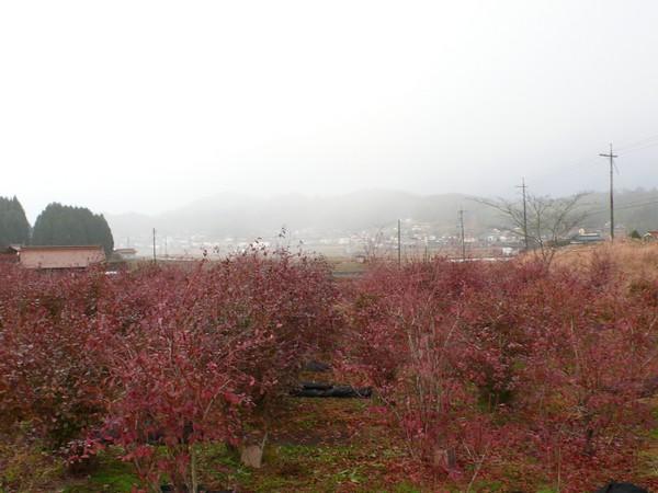 f:id:akinosato:20201219164454j:plain