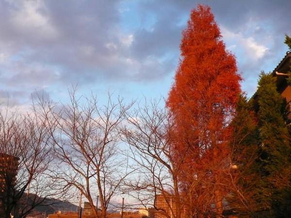 f:id:akinosato:20201222163750j:plain