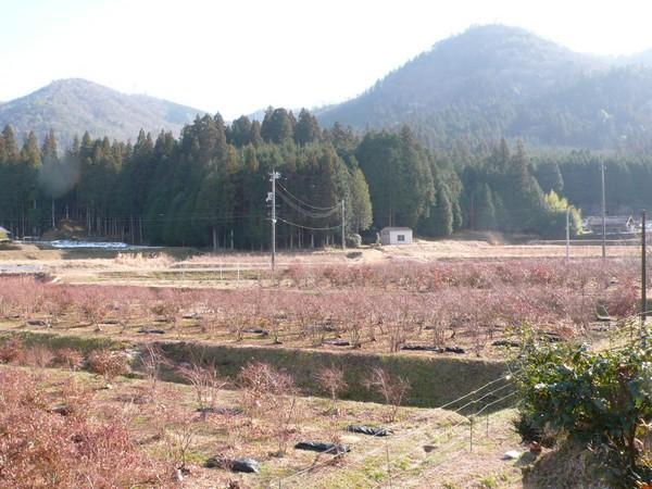 f:id:akinosato:20210114141414j:plain