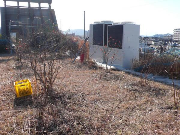 f:id:akinosato:20210202152654j:plain