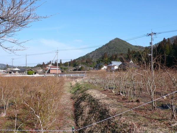 f:id:akinosato:20210228153248j:plain