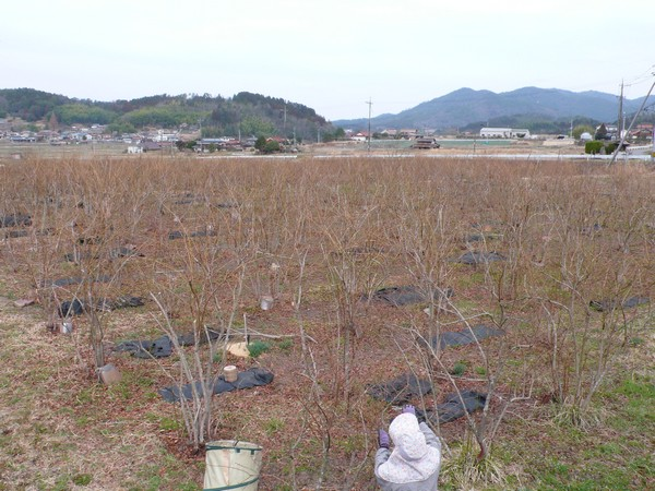 f:id:akinosato:20210309134237j:plain