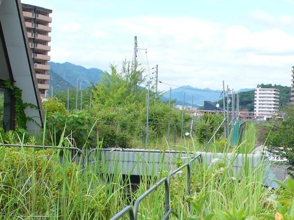f:id:akinosato:20210701144130j:plain