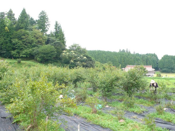 f:id:akinosato:20210910111418j:plain