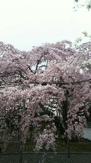 f:id:akiotop888:20170411230623j:image