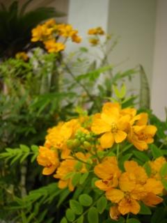 f:id:akip_behappy:20100325233033j:image