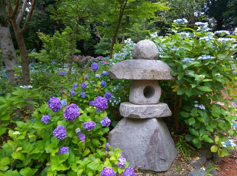 紫陽花と灯篭
