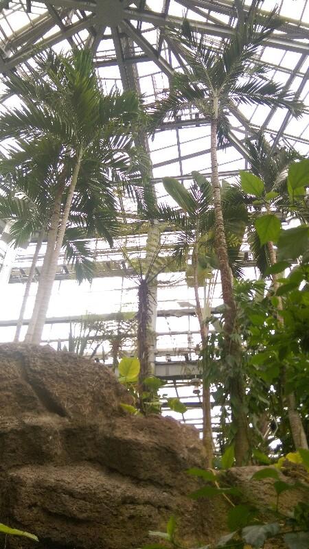 茨城県植物園 温室のヤシ