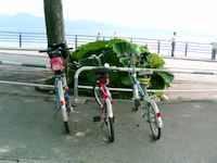 自転車の後ろは「秋田蕗(ふき)」