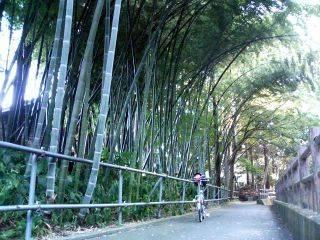15:59 衣川に沿った小径に面した見事な竹ヤブ・・・タケノコ掘りに来ようかな?