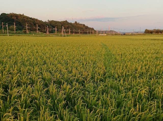 f:id:akipota:20190813190120j:image