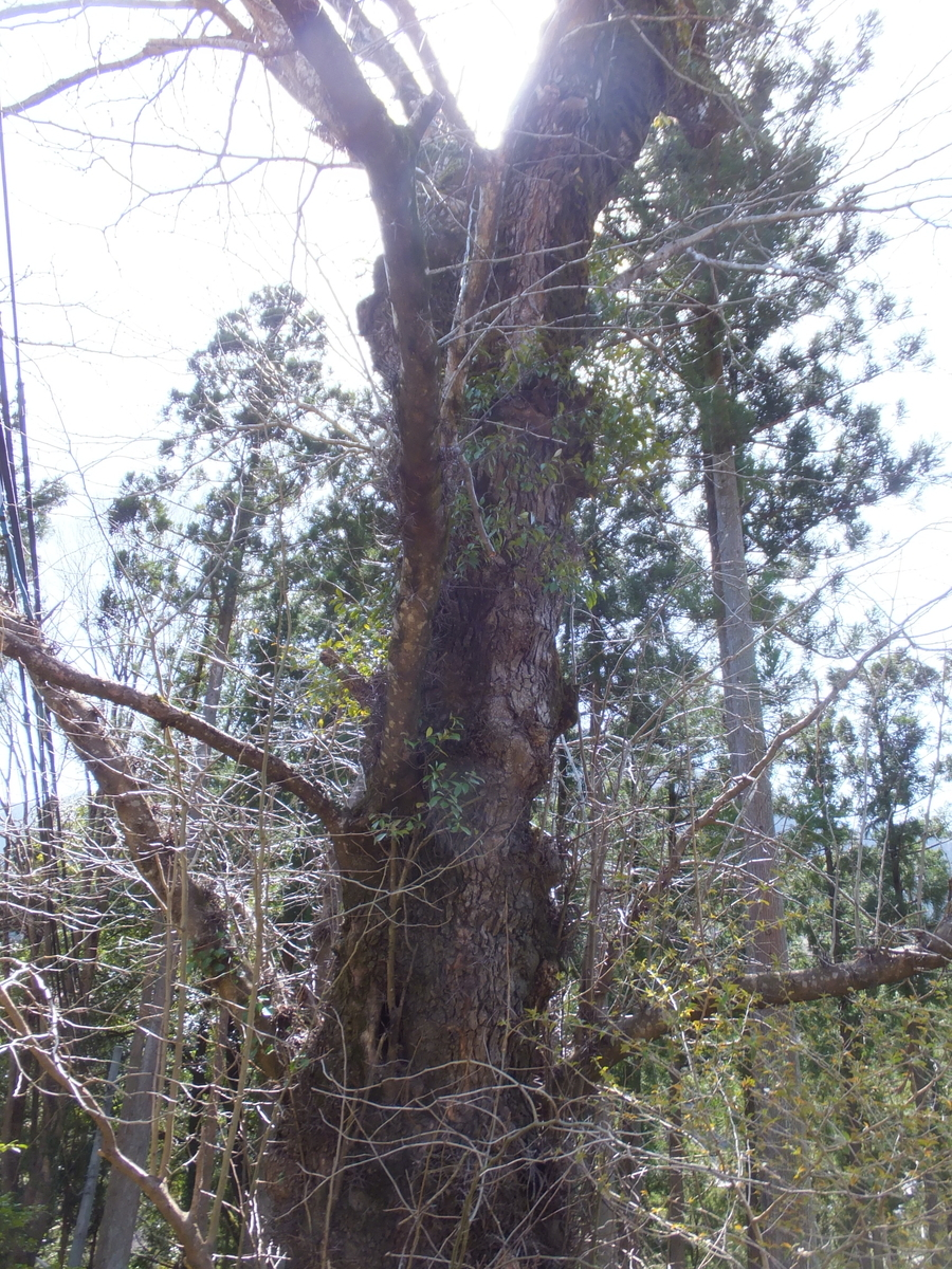 f:id:akira-kami:20120203162010j:plain