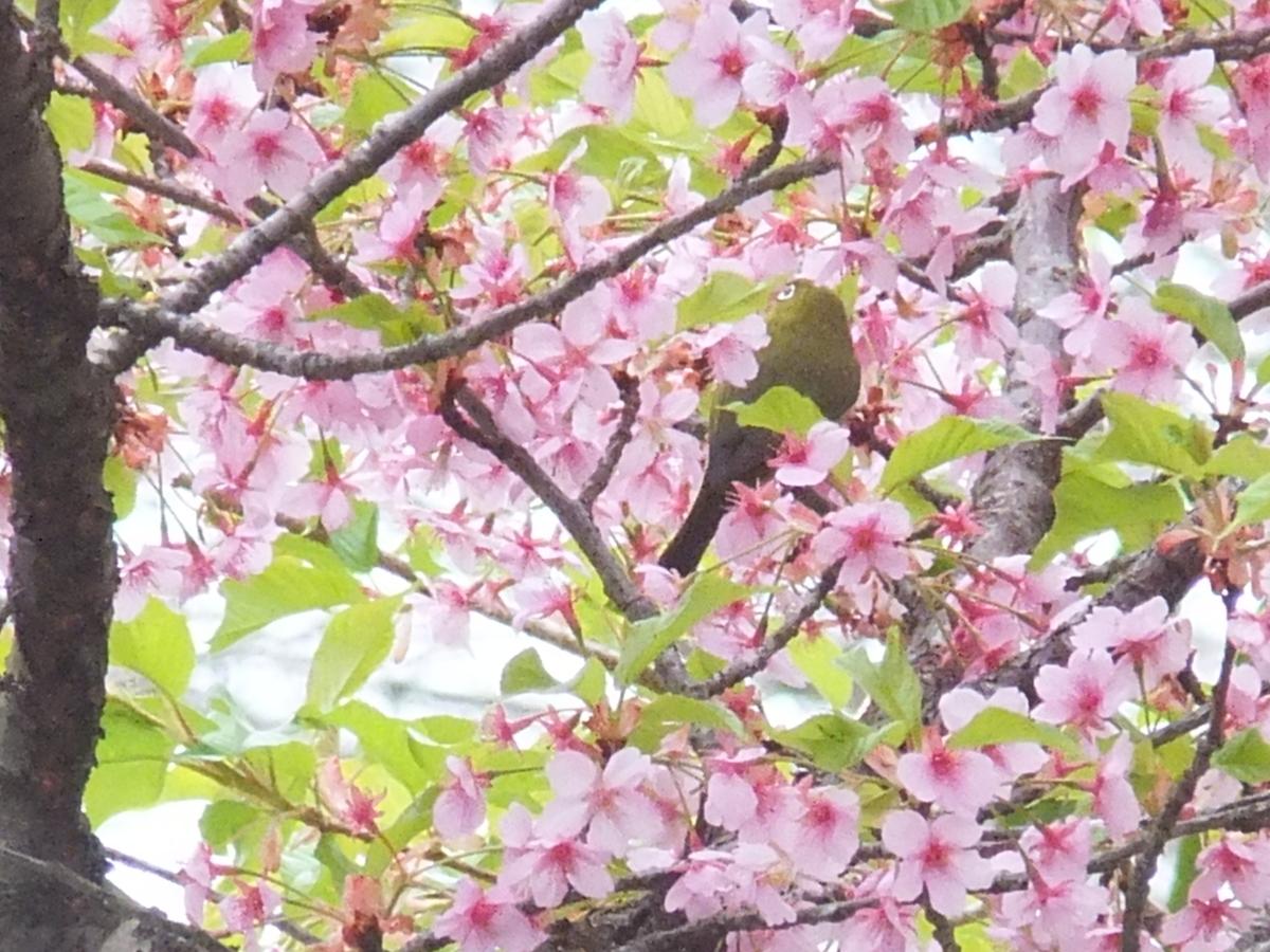 f:id:akira-kami:20120218164619j:plain
