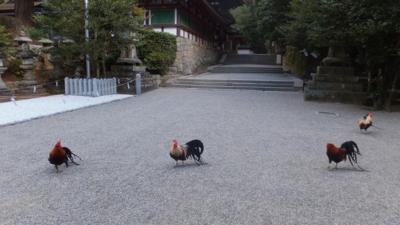 f:id:akira-kami:20130224134948j:image:w360