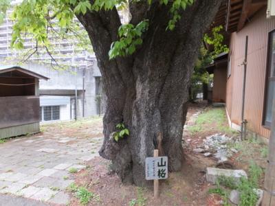 f:id:akira-kami:20180407162816j:image:w360