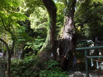 f:id:akira-kami:20180428150507j:image:w360