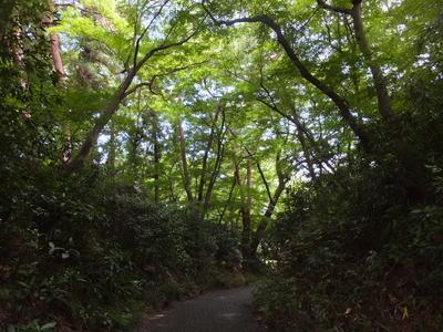 f:id:akira-kami:20180708140101j:image:w360
