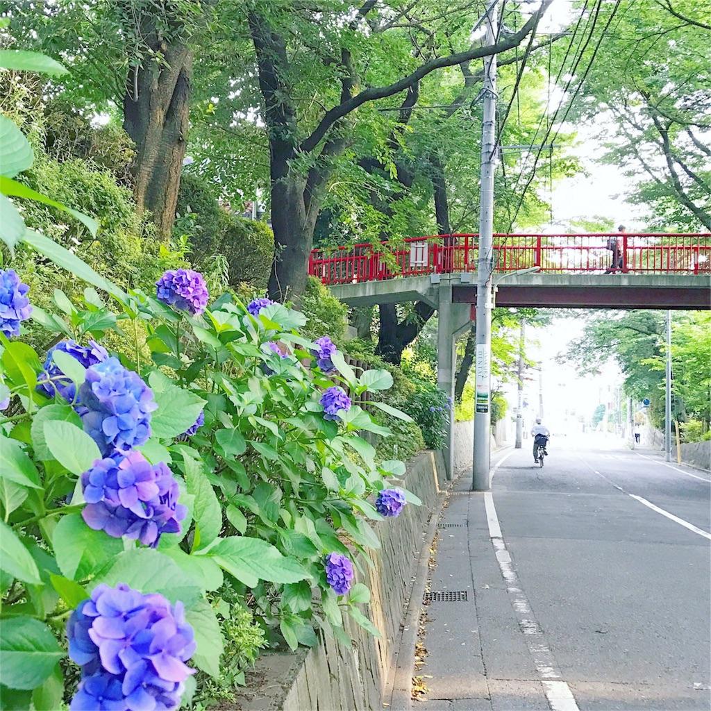 f:id:akira-wakasugi:20170712065331j:image