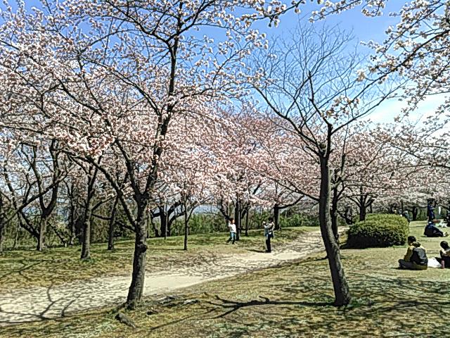 桜の花見でのんびりする方達