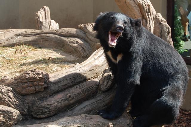 日本に生息する熊