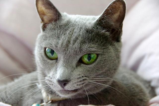 身軽なニンジャ猫